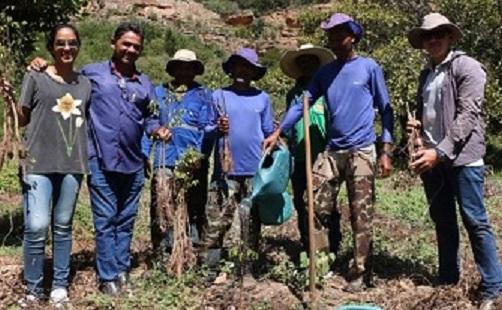 plantio de umbuzeiros na serra do giz